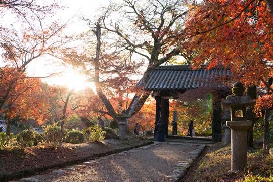 紅葉シリーズ第3弾「秋月城跡」