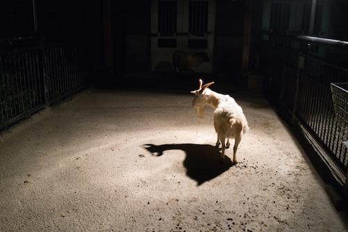 福岡市動植物園「夜の動植物園」に行ってきた
